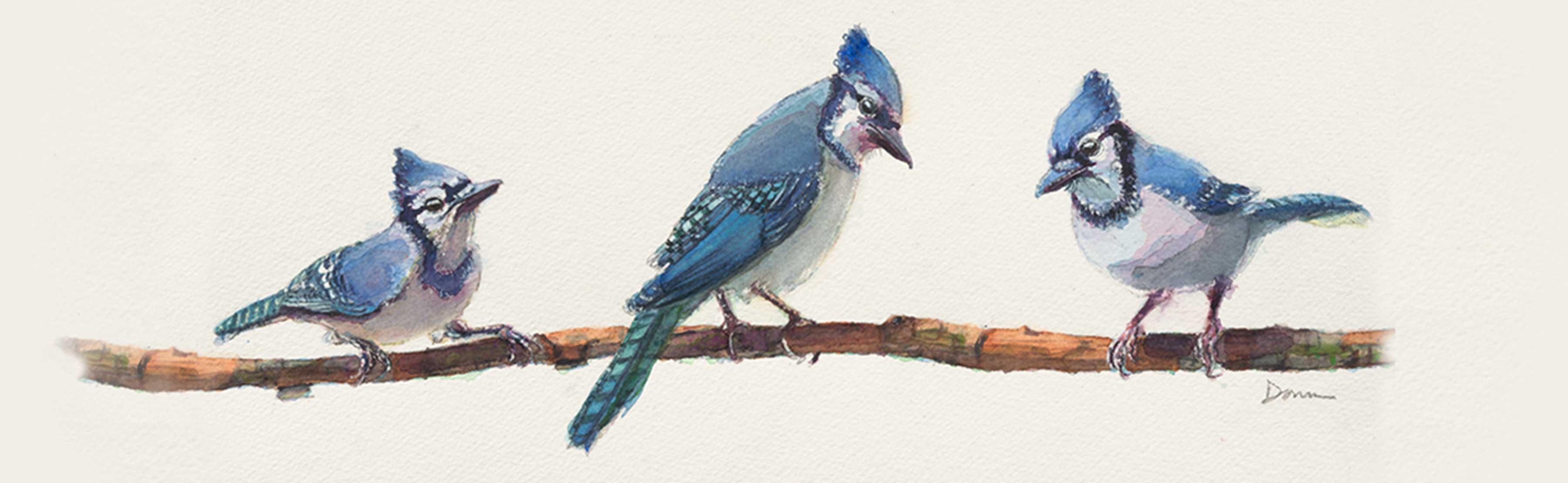 header-background-bluejay-crop